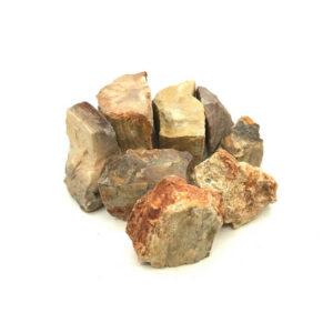 Wasserstein fossiles versteinertes Holz