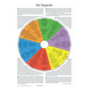 Infografik: Die Organuhr